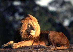 ケニアに行こう!のイメージ